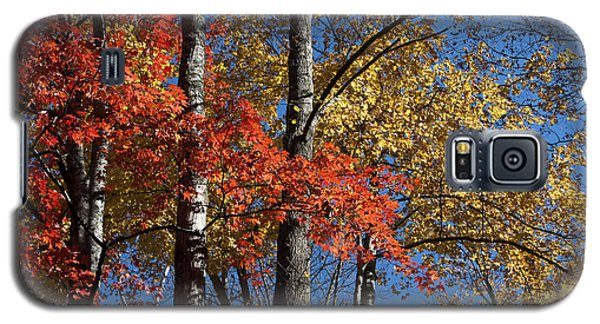 Autumn II Galaxy S5 Case