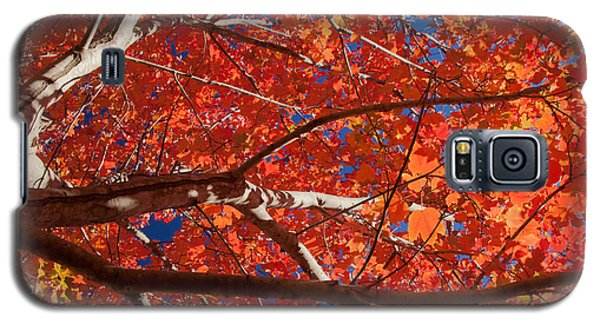 Autumn In Australia Galaxy S5 Case by Carole Hinding