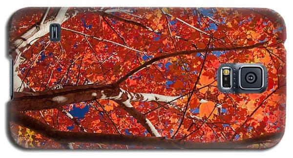 Autumn In Australia Galaxy S5 Case