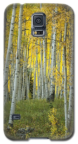 Autumn In The Aspen Grove Galaxy S5 Case