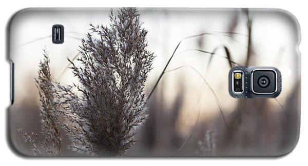 Galaxy S5 Case featuring the photograph Autumn In The Tall Grass by Andrew Pacheco