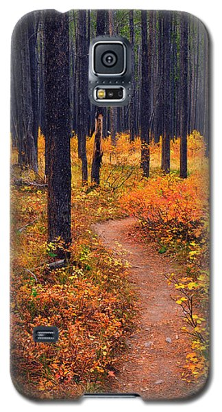Autumn In Yellowstone Galaxy S5 Case