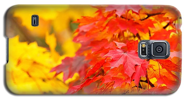 Autumn Is Beautiful Galaxy S5 Case