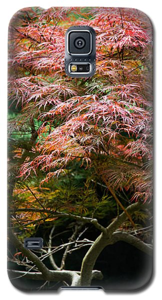 Autumn Is Here Galaxy S5 Case