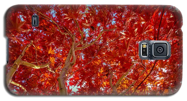 Autumn Japanese Maple Galaxy S5 Case