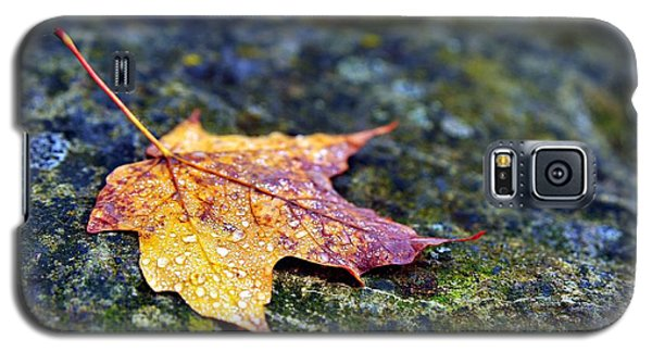 Autumn Leaf On Rocky Ledge Galaxy S5 Case