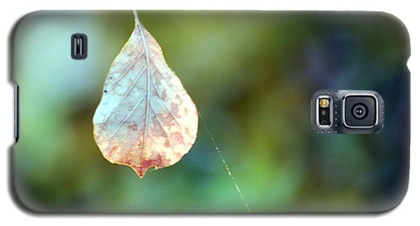 Galaxy S5 Case featuring the photograph Autumn Leaf Suspended by Linda Cox