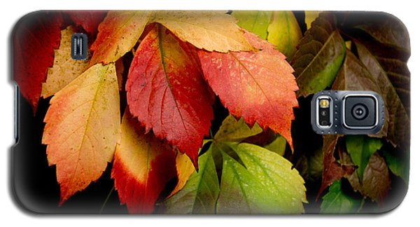 Autumn Leaves Galaxy S5 Case