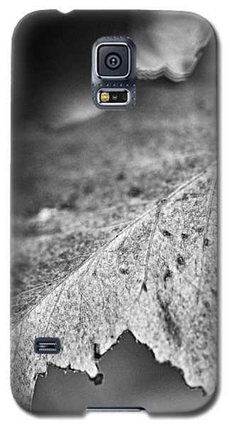 Autumn Leaves B And W Galaxy S5 Case