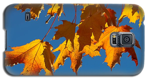 Galaxy S5 Case featuring the photograph Autumn Leaves by Dennis Bucklin