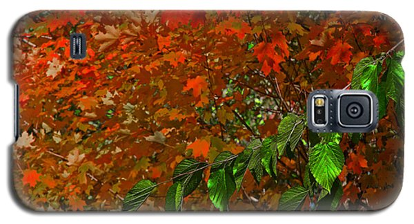 Galaxy S5 Case featuring the photograph Autumn Leaves In Red And Green by Andy Lawless