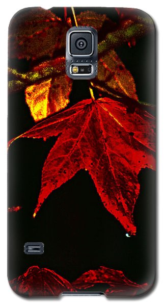 Galaxy S5 Case featuring the photograph Autumn Leaves by Lesa Fine