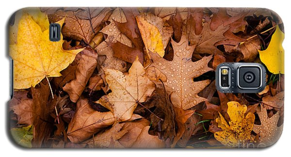 Galaxy S5 Case featuring the photograph Autumn Leaves by Matt Malloy