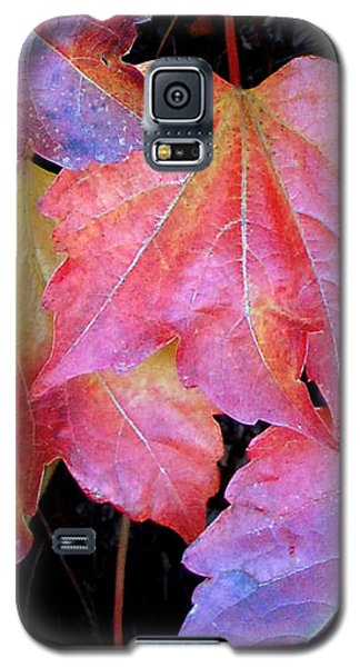 Autumn Leaves Up Close Galaxy S5 Case