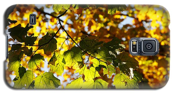 Galaxy S5 Case featuring the photograph Autumn Light In Leaves by Lincoln Rogers