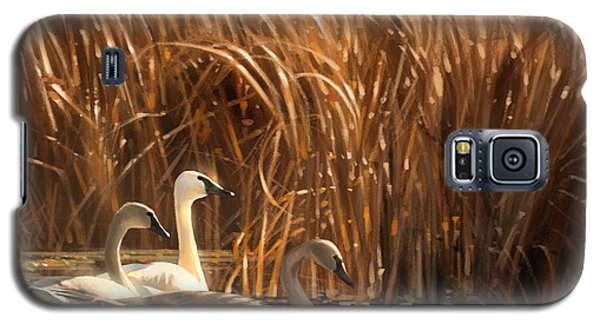 Swan Galaxy S5 Case - Autumn Light- Trumpeter Swans by Aaron Blaise