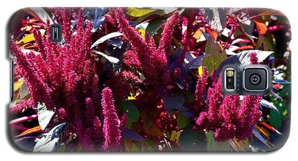 Autumn Magenta Jewel Alstede Farm Galaxy S5 Case