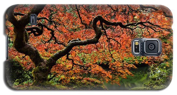 Autumn Magnificence Galaxy S5 Case by Don Schwartz
