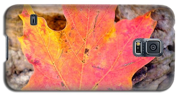 Autumn Maple Leaf On A Log Galaxy S5 Case