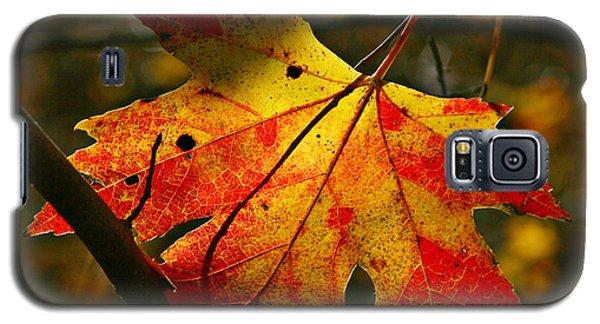 Autumn Maple Leaf Galaxy S5 Case