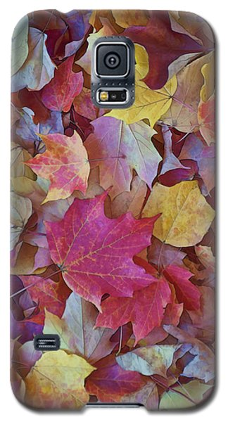Autumn Maple Leaves - Phone Case Galaxy S5 Case