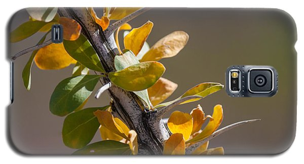 Galaxy S5 Case featuring the photograph Autumn Ocotillo by Beverly Parks