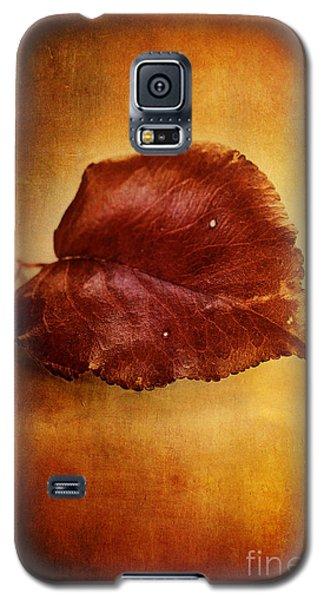 Autumn Pear Leaf Galaxy S5 Case by Stephanie Frey