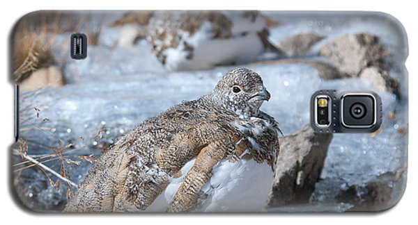 Autumn Plumage White-tailed Ptarmigan Galaxy S5 Case