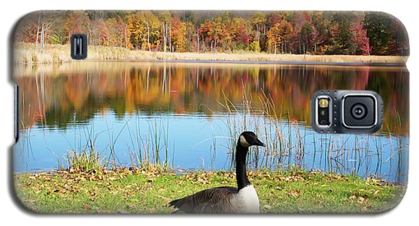 Autumn Pond Goose Galaxy S5 Case by Aimee L Maher Photography and Art Visit ALMGallerydotcom