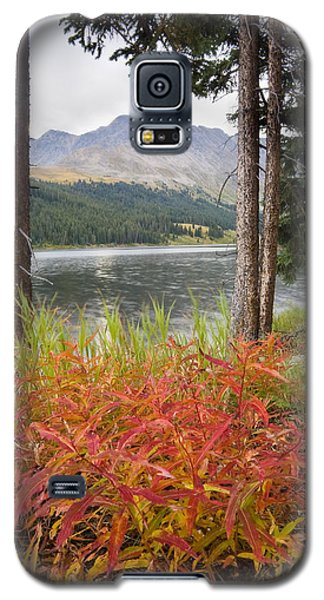 Autumn Quandry Galaxy S5 Case by Morris  McClung