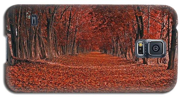 Autumn Galaxy S5 Case by Raymond Salani III