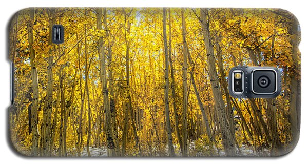 Autumn Rays Galaxy S5 Case