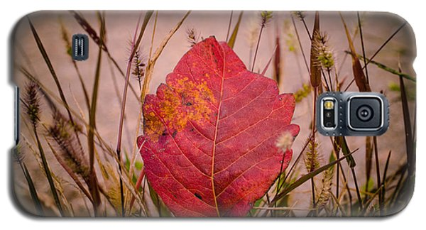 Galaxy S5 Case featuring the photograph Autumn Rest by Julie Clements