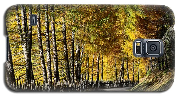 Winding Road Through The Autumn Trees Galaxy S5 Case