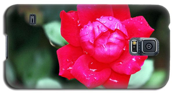 Autumn Rose After The Rain Galaxy S5 Case