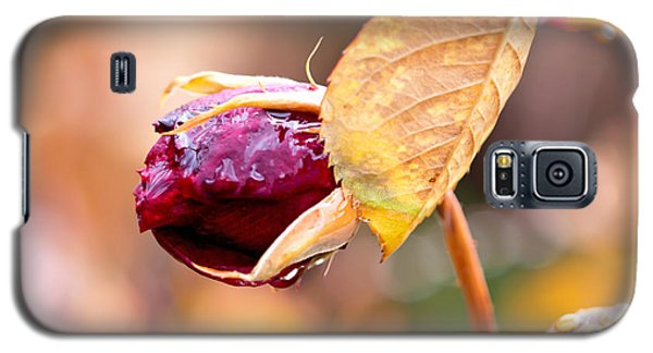 Galaxy S5 Case featuring the photograph Autumn Rosebud by Rona Black
