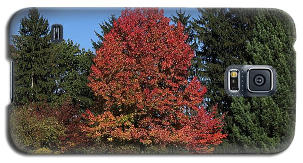 Autumn Scene Galaxy S5 Case by Bill Woodstock