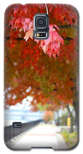 Autumn Sidewalk Galaxy S5 Case