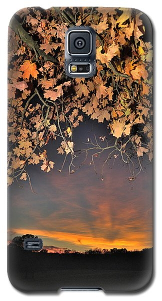 Autumn Sky And Leaves 1 Galaxy S5 Case