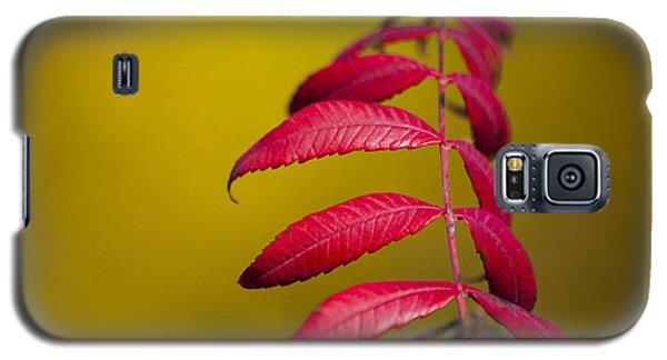 Autumn Sumac Galaxy S5 Case