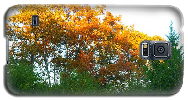 Galaxy S5 Case featuring the photograph Autumn Sunlight by Pete Trenholm