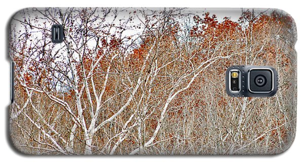 Galaxy S5 Case featuring the photograph Autumn Sycamores by Bruce Patrick Smith