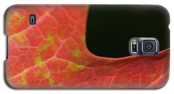 Galaxy S5 Case featuring the photograph Autumn  by Tara Lynn