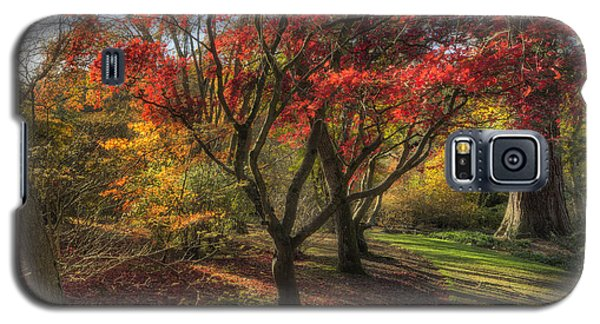 Autumn Tree Sunshine Galaxy S5 Case
