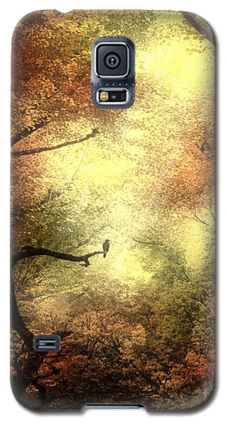Autumn Trees With Light Shining Through Galaxy S5 Case