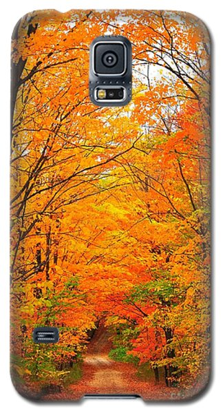 Autumn Tunnel Of Trees Galaxy S5 Case by Terri Gostola