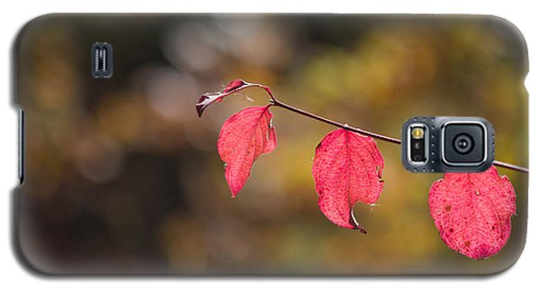 Galaxy S5 Case featuring the photograph Autumn Twig With Red Leaves by Jivko Nakev