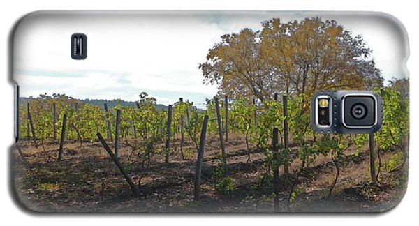 Galaxy S5 Case featuring the photograph Autumn Vineyard by Margie Avellino