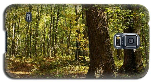 Autumnal Woods Galaxy S5 Case