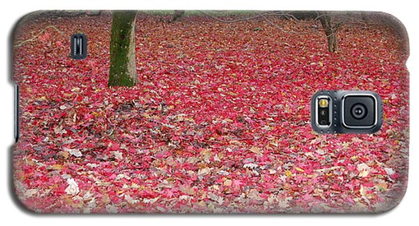 Autumn's Gift Galaxy S5 Case by Linda Prewer
